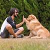Compreenda o amor entre os homens e os animais